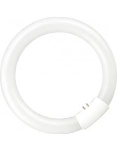 Tubo circular t9 g10q 305mm 32w 6400 de marca caja de 20