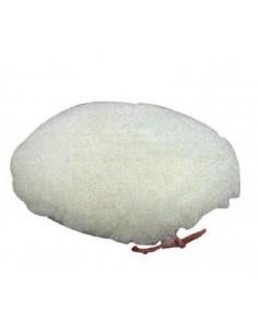 Disco variopad 1067.70 180 accesorio pulir de variopad