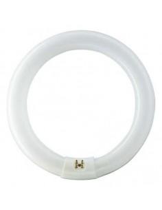 Tubo fluorescente circular l22/865-22w de osram caja de 12